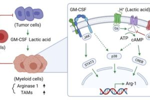"""Cross-discipline team publish study, """"Breast cancer-derived GM-CSF regulates arginase 1 in myeloid cells to promote an immunosuppressive microenvironment"""""""